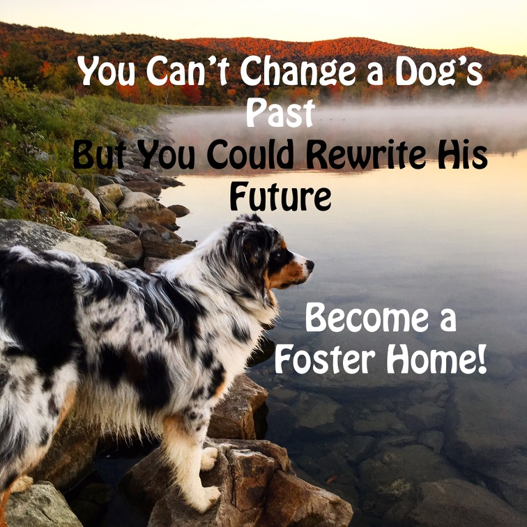 Change a dogs future